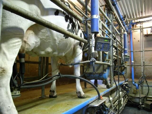 Mineralen Melkvee - TSM International